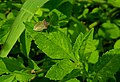 Green Insect on green leaf.jpg