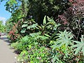 Green Spring Gardens in August (14920630215).jpg