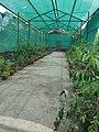 Green house - panoramio - Rajkumar Rimal.jpg
