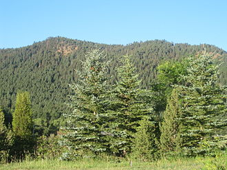 El Paso County, Colorado - Summer greenery of El Paso County