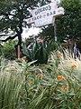 Guero's Native Garden - panoramio.jpg