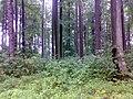 Hřeben - panoramio.jpg