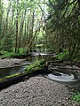 Haans Creek - Haida Gwaii (27232047936).jpg