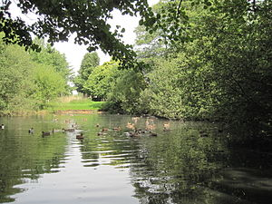 Hadley Green - Joslin's Pond in Hadley Green