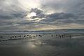 Halfmoon Bay, California.jpg
