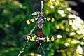 Handmaiden moths (Family Ctenuchinae) (28687143196).jpg