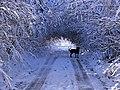 Heavy Snow - panoramio (1).jpg