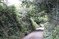 Hedgebank, Shutterton Lane - geograph.org.uk - 1510042.jpg