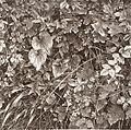 Hedgerow Study LACMA M.2008.40.714.4.jpg