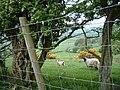 High Side near Bassenthwaite - geograph.org.uk - 121633.jpg