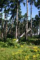 High Wrong Corner, Thetford Forest - geograph.org.uk - 514448.jpg