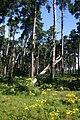 High Wrong Corner, Thetford Forest - geograph.org.uk - 514448.jpg