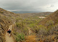 Hiking Diamond Head (4603045482).jpg
