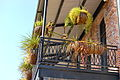 Historic Downtown New Iberia, LA Balcony.jpg