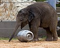 Houston Zoo 2010 -11 (5309317821).jpg
