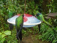 Dokarmianie Ptaków Wikipedia Wolna Encyklopedia