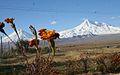 IĞDIR ARALIK AŞAĞI ÇİFTLİK AĞRI DAĞLARI - panoramio.jpg