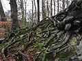 Impressive roots.jpg