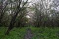 In the forest near Ubezhenskaya - panoramio (16).jpg