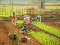 India Goa Women planting.jpg