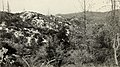 Injury to vegetation and animal life by smelter wastes (1908) (14594745480).jpg