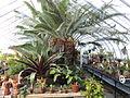 Interior view - Talcott Greenhouse - Mount Holyoke College - DSC04489.JPG