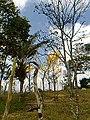 Ipê Amarelo e Palmeira do Licuri -Ba.jpg