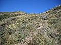 Isabeloca^ - panoramio (4).jpg