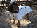 Jackie o dog (4044798289).jpg