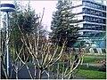 January Frost Botanic Garden Freiburg - Master Botany Photography 2014 - panoramio (16).jpg