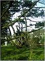 January Frost Botanic Garden Freiburg - Master Botany Photography 2014 - panoramio (23).jpg