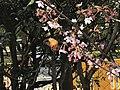 Jardín Japonés Mariposa y Sakura.jpg