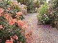 Jardin botanique - Planète pelargonium 2.jpg