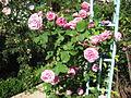 Jardin botanique Dijon 006.jpg