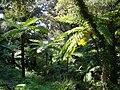 Jardin de Nouvelle-Zélande - Domaine du Rayol.jpg