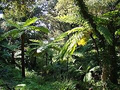 Domaine du rayol wikip dia for Jardin rayol canadel