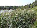 Jezioro Głębokie - gm. Brody.jpg