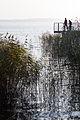 Jezioro Miedwie - rowerzyści odpoczywający na łonie natury.jpg