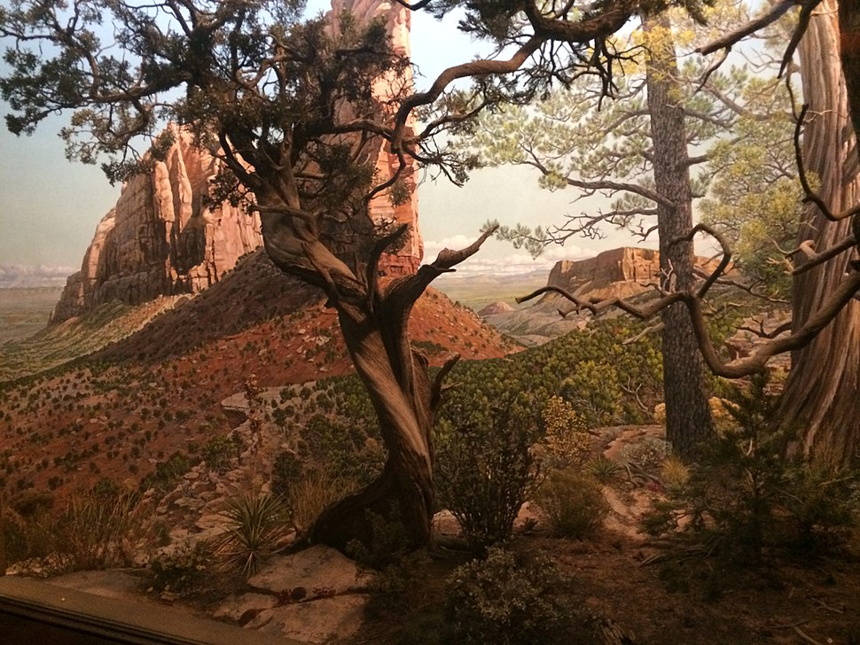 Juniper Forest, Hall of North American Forests, AMNH