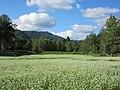 Kaida buckwheat farm.jpg