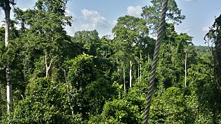 Eastern Guinean forests