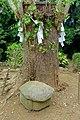 Kameishi (turtle stone) - Enoshima, Japan - DSC07857.jpg