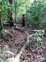 Two women discuss beside two very long tree roots in a forest.