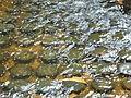 Kbal Spean - 009 Submerged Lingas (8583638087).jpg
