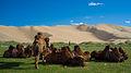 Khongoryn Els, Gurvansaikhan NP, Gobi desert, Mongolia.jpg