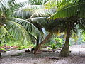 Kiribati(117).JPG