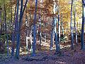 Kirkeler Wald 2003-11-06 02.JPG