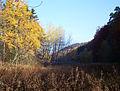 Kirkeler Wald 2003-11-07.JPG