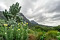 Kirstenbosch Botanical Garden-3140.jpg