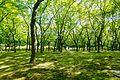 Kitanomaru Park - Tokyo, Japan - DSC04843.jpg